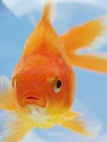 Persona4Golden